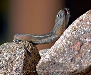 Chipmunk Yoga, New Mexico